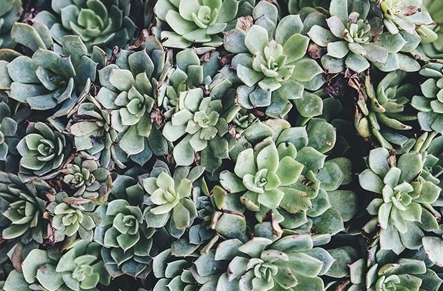 diseño de interiores jardinería Castellón