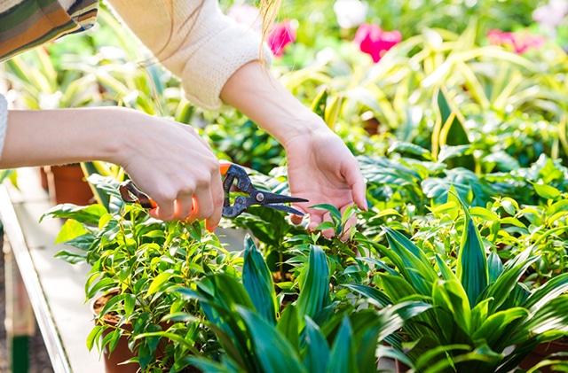 servicio de poda de jardines en Castellón
