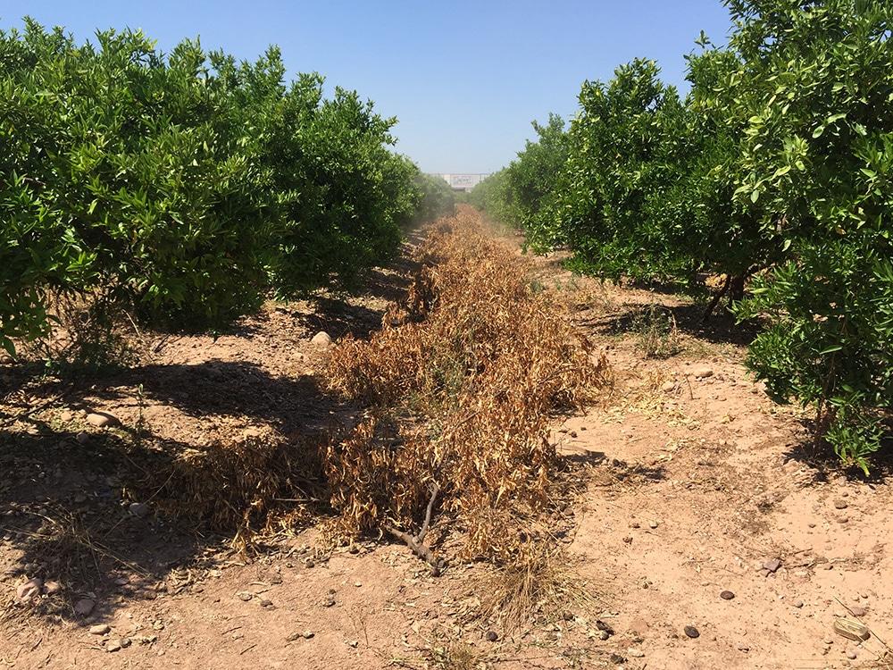 Servicios Agricolas Melia trituradora campo