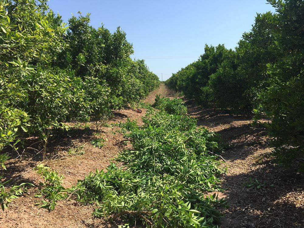 Trituradora agricola Castellon