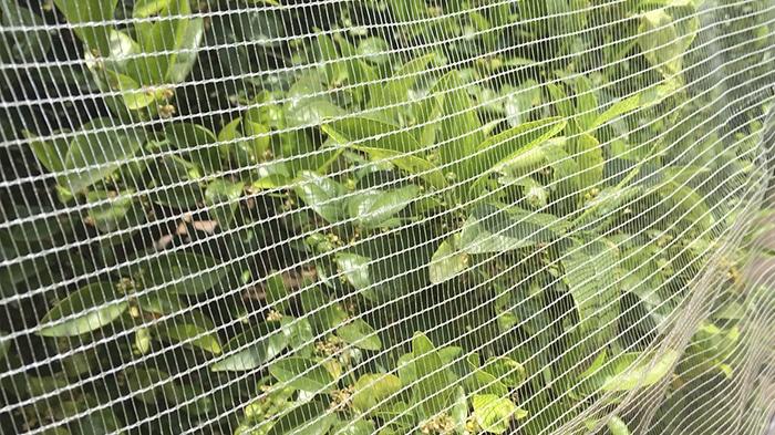 Los beneficios de las mallas antisemilla en los cultivos de cítricos