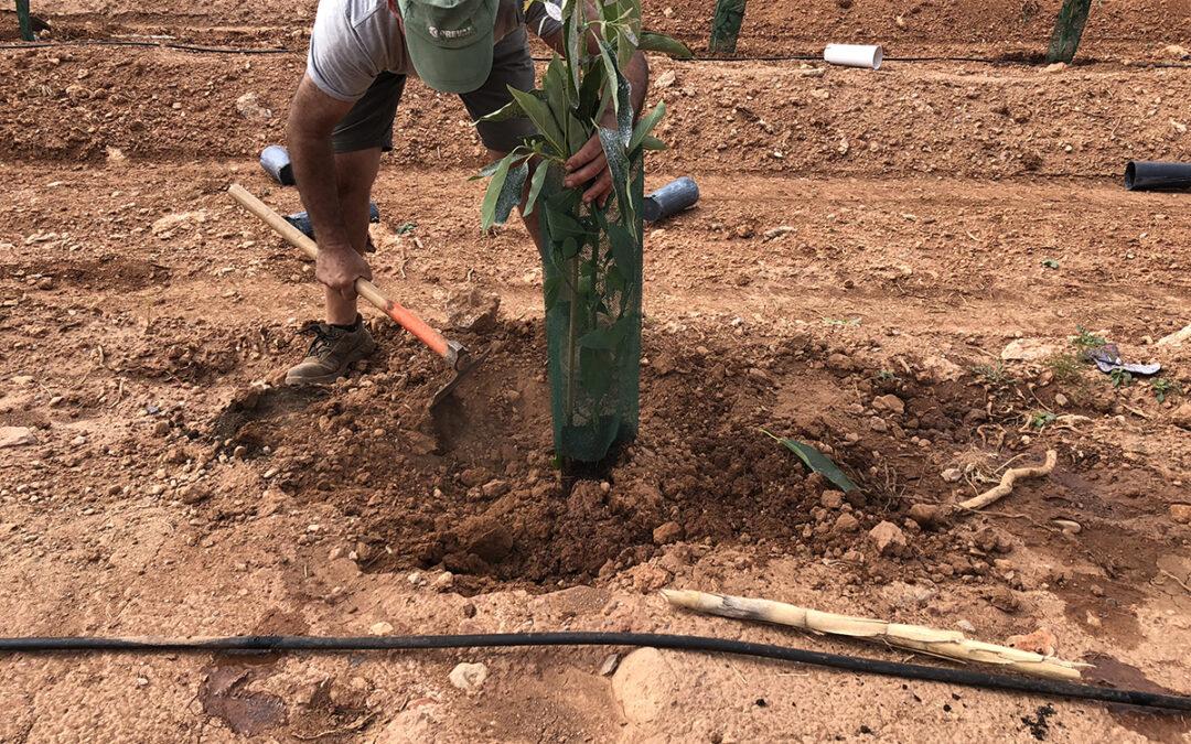 Descubre nuestro último proyecto: diseño y plantación de aguacates